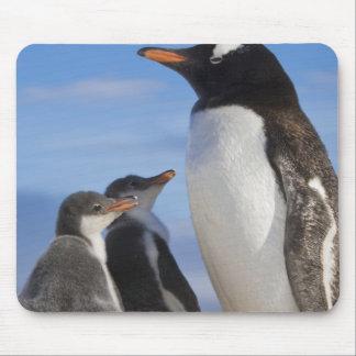 La Antártida, ensenada de Neko (puerto). Pingüino  Alfombrilla De Ratón