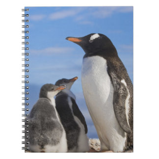 La Antártida, ensenada de Neko (puerto). Pingüino  Cuaderno