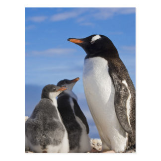 La Antártida, ensenada de Neko (puerto). Pingüino Postal