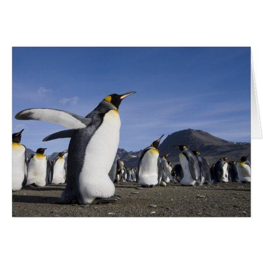 La Antártida, isla del sur de Georgia (Reino Tarjeta De Felicitación