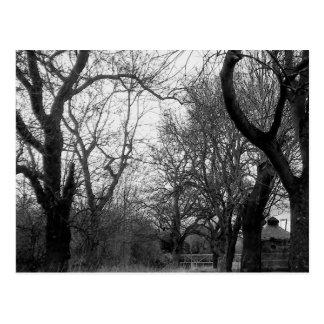 La arboleda en invierno - postal