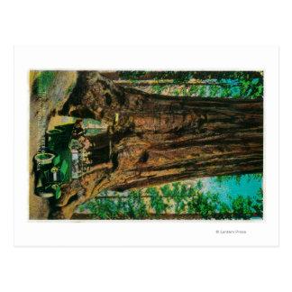 La arboleda grande del árbol de Mariposa Yosemite Postal