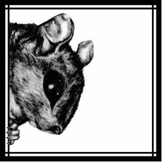 La ardilla - gancho y lazo 1 imán fotoescultura