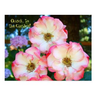 ¡La belleza miente dentro del jardín! rosas de las Postal