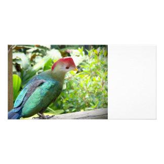 La cabeza colorida del pájaro giró el poste tarjetas con fotos personalizadas