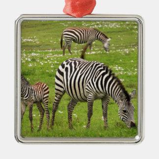 La cebra raya destino africano de la naturaleza de ornaments para arbol de navidad