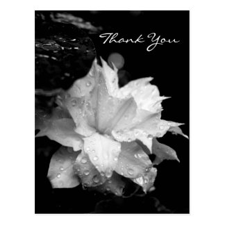 La condolencia floral de la foto del Clematis 2a Postal