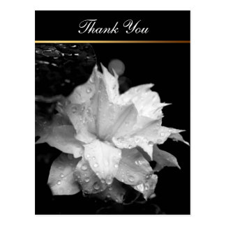 La condolencia floral de la foto del Clematis 2c Postal