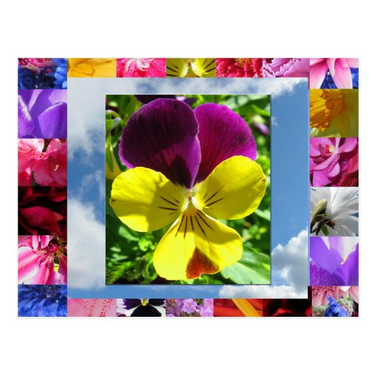 La felicidad florece la postal