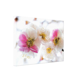 La flor de cerezo blanca rosada de la primavera lienzo