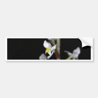 La flor de la orquídea Ludisia se decolora Pegatina Para Coche
