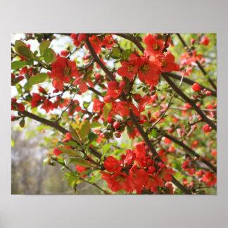 La flor de la primavera roja florece floral posters