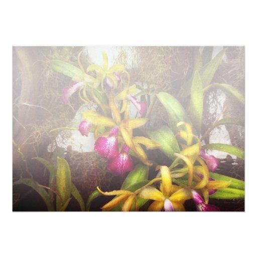 La flor - orquídea - allí es algo sobre orquídeas comunicados personales