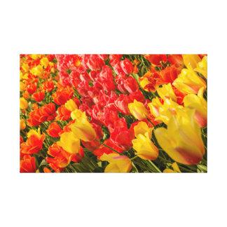 la floración de tulipanes en una impresión   de la