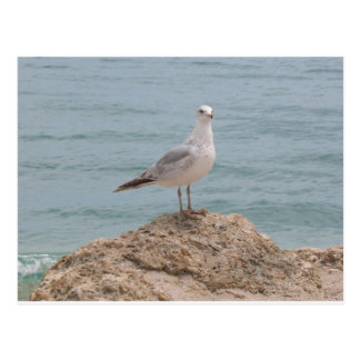 La gaviota solitaria (2134) postal