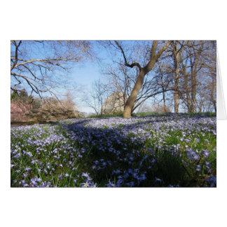 La gloria de la primavera--Tarjeta Tarjeta