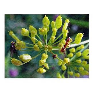 La hormiga, la mosca, y la mala hierba postal