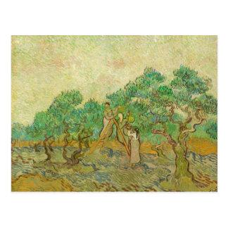La huerta verde oliva por la postal de Van Gogh