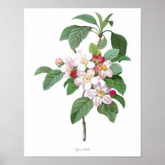 La impresión botánica MÁS DE ALTA CALIDAD del flor
