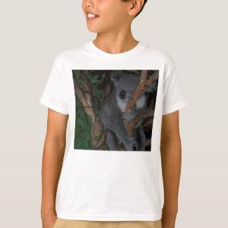 La koala embroma la camisa