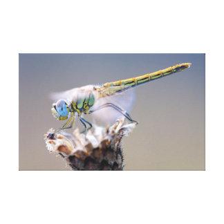 La libélula lienzo