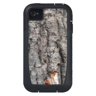 La madera del árbol de corteza de abedul Foto-mues