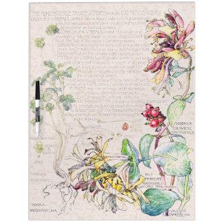 La madreselva botánica florece al tablero seco del