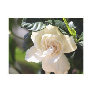 La magnolia blanca envolvió la impresión de la