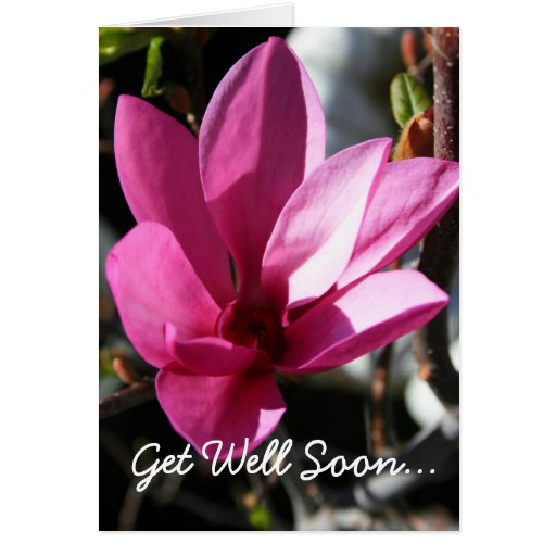 La magnolia japonesa consigue pronto la tarjeta de