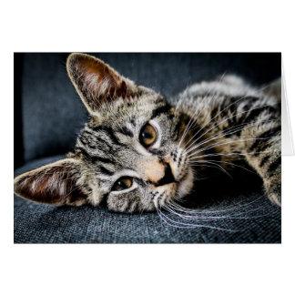 La manera del gato tengo gusto de ella tarjeta del