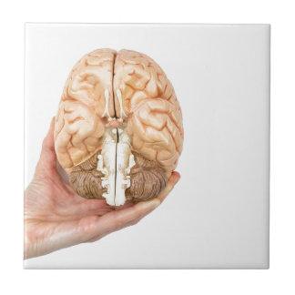 La mano sostiene el cerebro humano modelo en el azulejo cuadrado pequeño