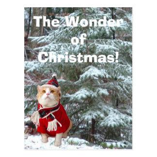 ¡La maravilla del navidad! Postal