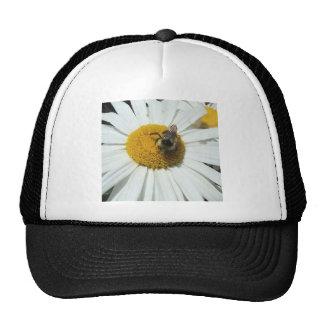 La margarita y manosea el gorra de la abeja