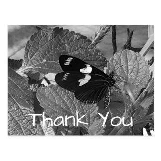 La mariposa blanco y negro hermosa le agradece postal