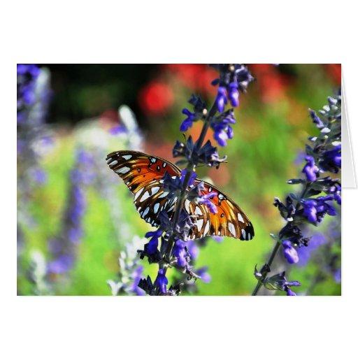 La mariposa consigue bien pronto felicitacion