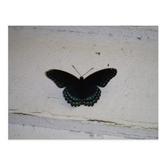 La mariposa negra y azul en blanco lavó la madera postal