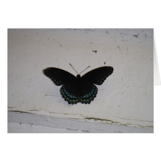 La mariposa negra y azul en blanco lavó la madera tarjetón