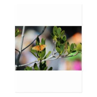La mariposa postal