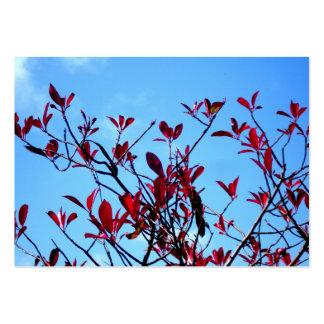 La mariposa roja sale de la tarjeta de visita