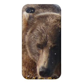 La mejor caja de la mota del oso de Brown del papá iPhone 4 Coberturas