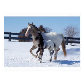 La nieve del invierno de los caballos se divierte  postal