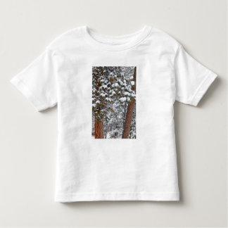 La nieve llena las ramas de los árboles de pino camiseta