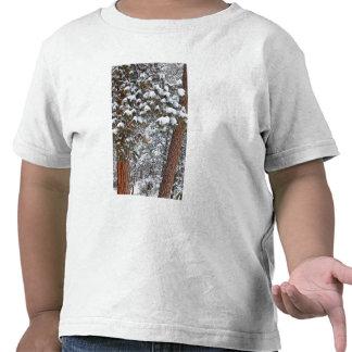 La nieve llena las ramas de los árboles de pino po camisetas