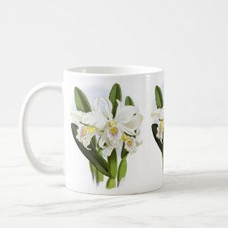 La orquídea blanca florece la taza