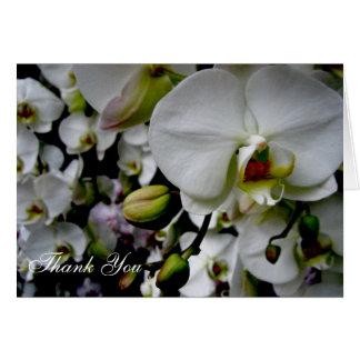 La orquídea blanca le agradece cardar tarjeta pequeña