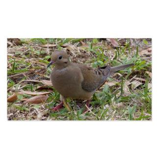 La paloma o la tortuga de luto se zambulló en la t tarjetas de visita