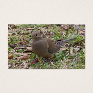 La paloma o la tortuga de luto se zambulló en la tarjeta de negocios