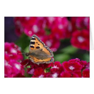 La pequeña mariposa de concha en las flores tarjeta de felicitación