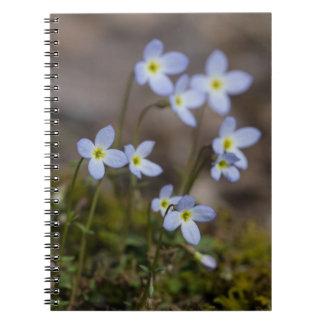 La pequeña púrpura de Bluets florece el cuaderno