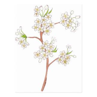 La pera ornamental florece acuarela postal